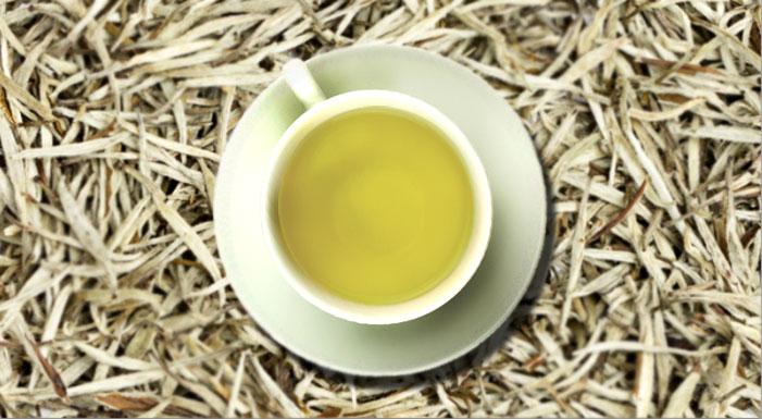 Chá Branco em cápsulas: acelerador do metabolismo, poder